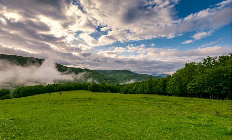 fog rise above the forest behind the grassy meadow on hillside. beautiful nature springtime scenery in mountains