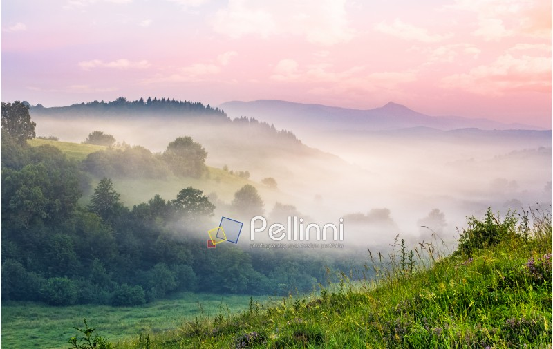 foggy forest in valley. spectacular mountain landscape at sunrise