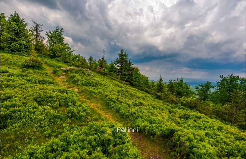 foot path uphill in to the forest. lovely summer scenery. hiking and outdoor activities concept. dark cloudy sky.