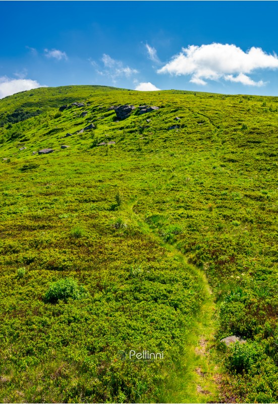 footpath through the grassy hills of the mountain. beautiful summer scenery in fine weather with some clouds on a blue sky