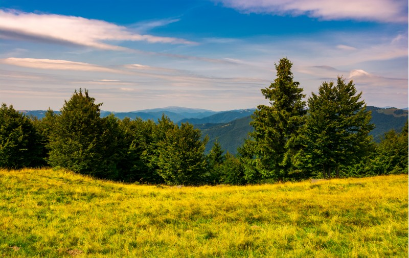 forest on a grassy meadow in mountains. beautiful summer landscape with Krasna mountain in the far distance under the blue sky with some clouds