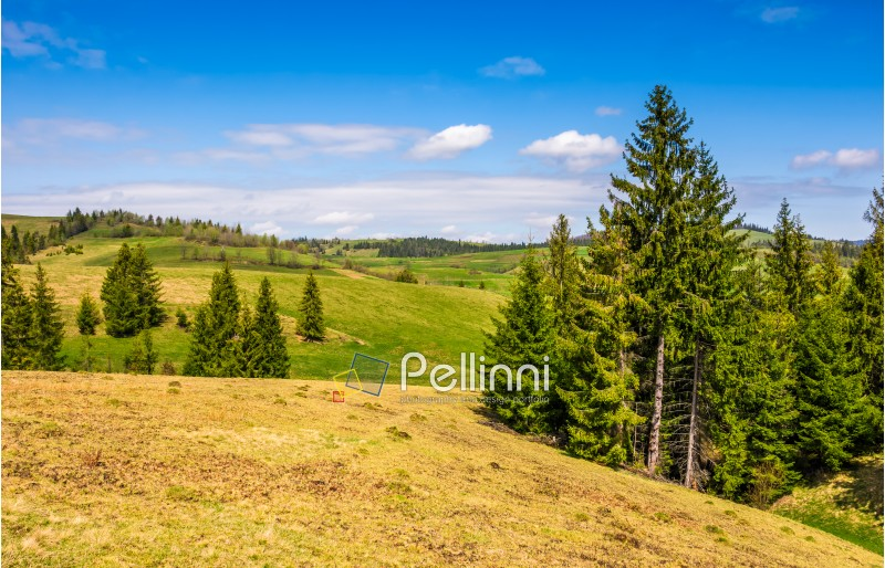forest on a hill side meadow. beautiful summer landscape in fine weather