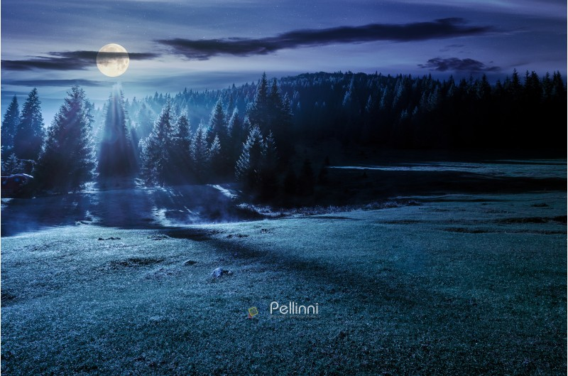 forest on grassy meadow at foggy night in full moon light. lovely nature scenery with forested hill in the distance