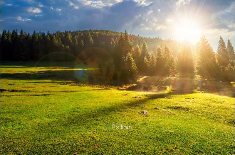 forest on grassy meadow at foggy sunrise. lovely nature scenery with forested hill in the distance