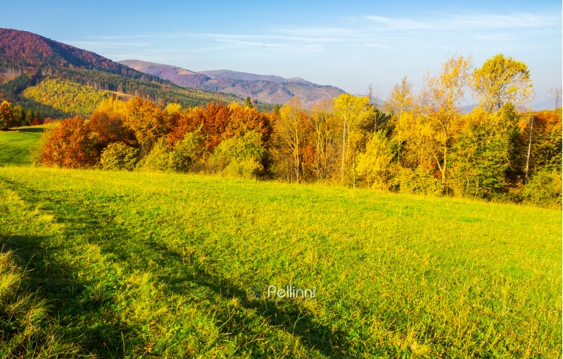 forest on grassy meadow in autumn. beautiful sunrise in mountains. colorful foliage on trees