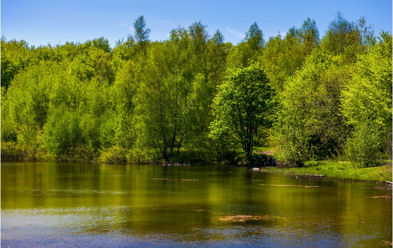 forest on the lake shore. lovely nature scenery on a bright springtime day