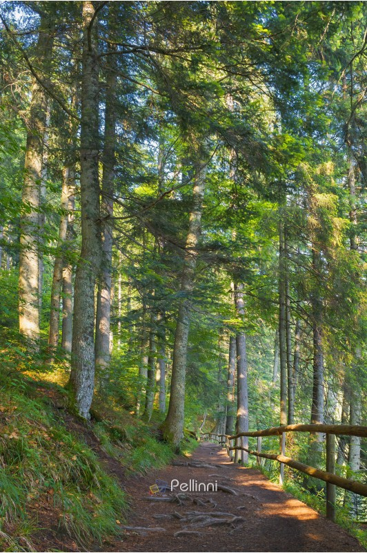 forest path in dappled light. wooden fence. low angle view. beautiful summer scenery