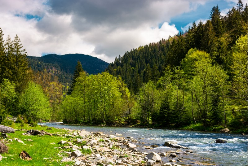 forest river with rocky shore in mountains. lovely countryside scenery in springtime