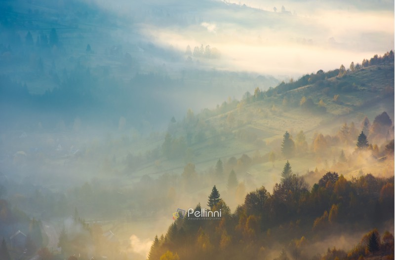 forested hills in rising autumn fog. amazing scenery in Carpathian mountains. beautiful nature background