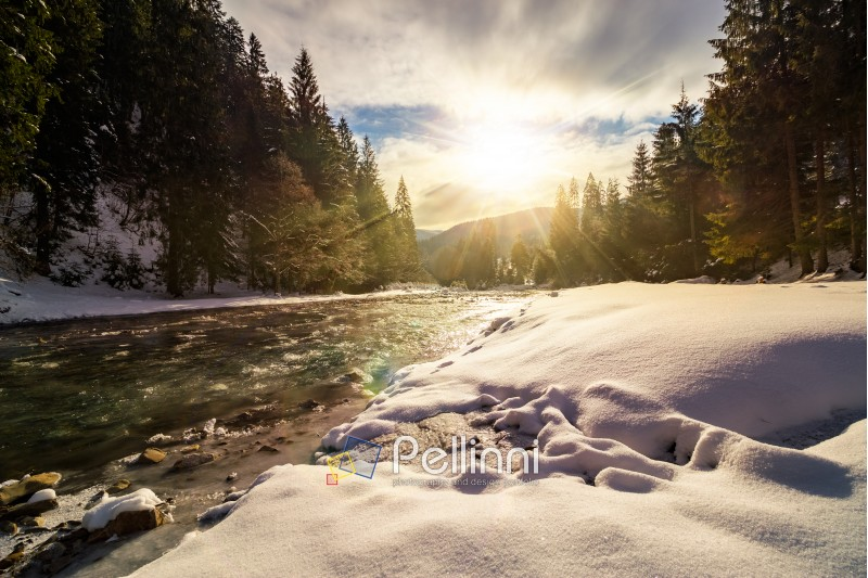 frozen river among conifer forest with snow on the ground in carpathian mountains in evening light
