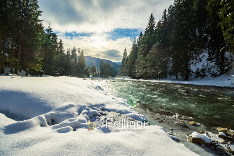 frozen river among conifer forest with snow on the ground in carpathian mountains