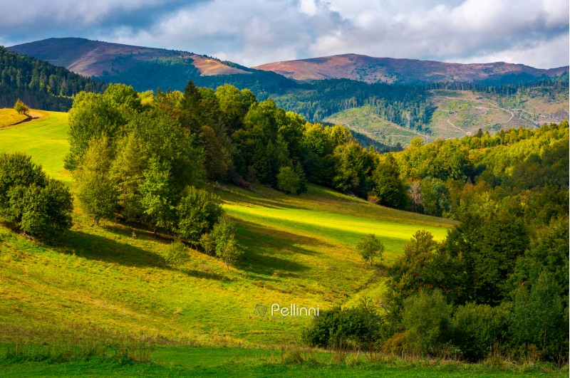 glade among the forest in mountains. beautiful autumn landscape of Carpathians.
