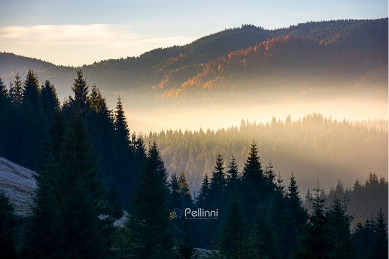 glowing fog in mountains at sunrise. beautiful autumn scenery of Apuseni Natural Park in Romania