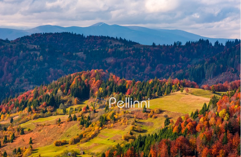 gorgeous mountain ridge behind the forest on hills. beautiful mountainous countryside landscape in autumn