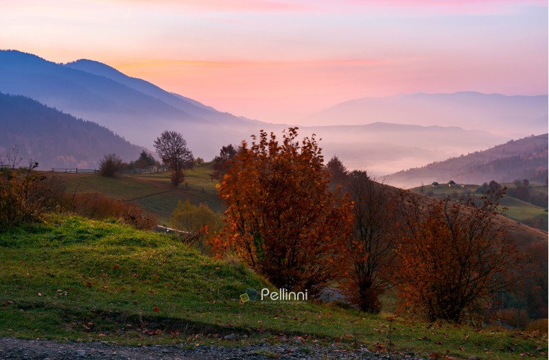gorgeous purple dawn in mountains. beautiful autumn landscape with fog in the distant valley. trees with red foliage on grassy hillside. location rural area of Synevyr National park, Ukraine