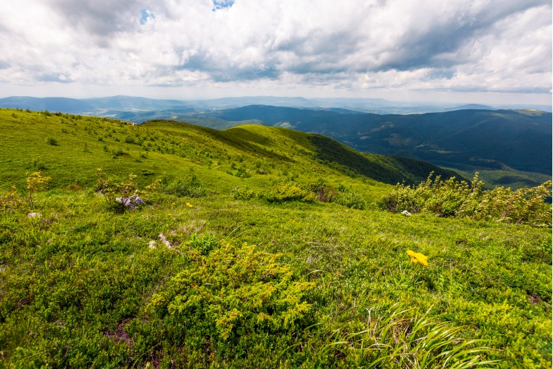 grassy hills of Carpathian alps in summer. beautiful nature scenery on a cloudy day.