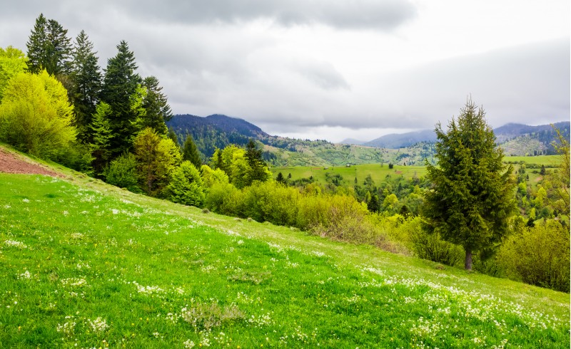 grassy hills of mountainous rural area. beautiful springtime countryside landscape.