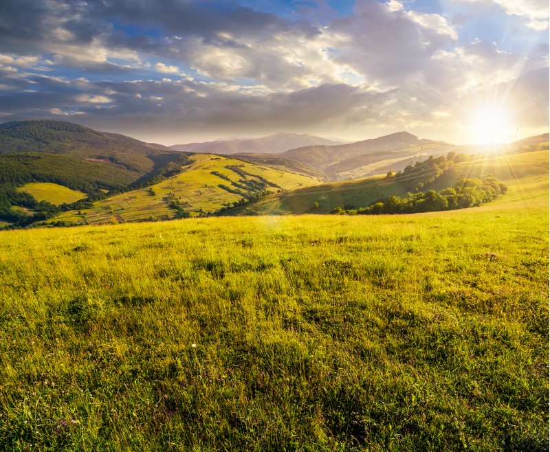 grassy meadow in mountains at sunset. beautiful summer countryside under the gorgeous sky