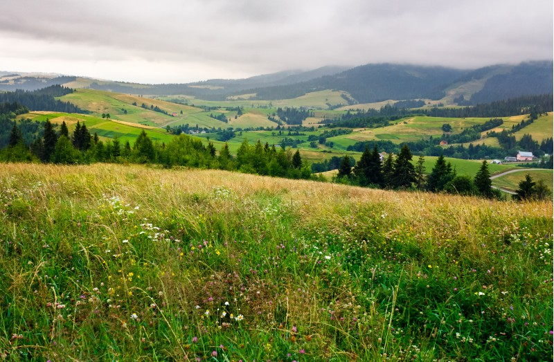 grassy meadow over the forest on a cloudy day. lovely mountainous countryside in summer time