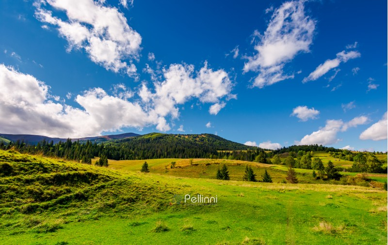 grassy meadows and forested hills. beautiful landscape with mountain ridge in the distance under the azure sky with gorgeous cloudscape