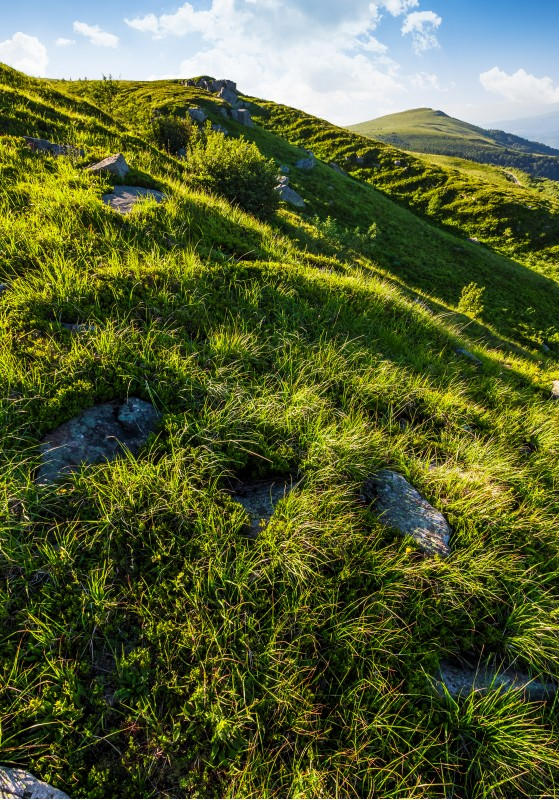 grassy slope of mountain in summertime. lovely nature background