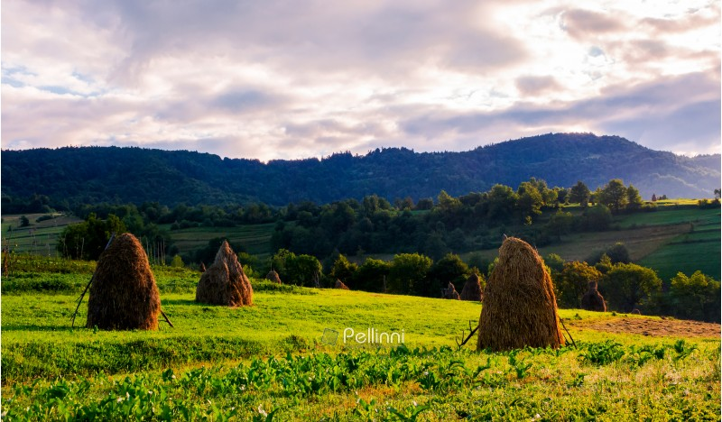 haystacks on the grassy field in mountains. lovely summer scenery of rural area in the morning
