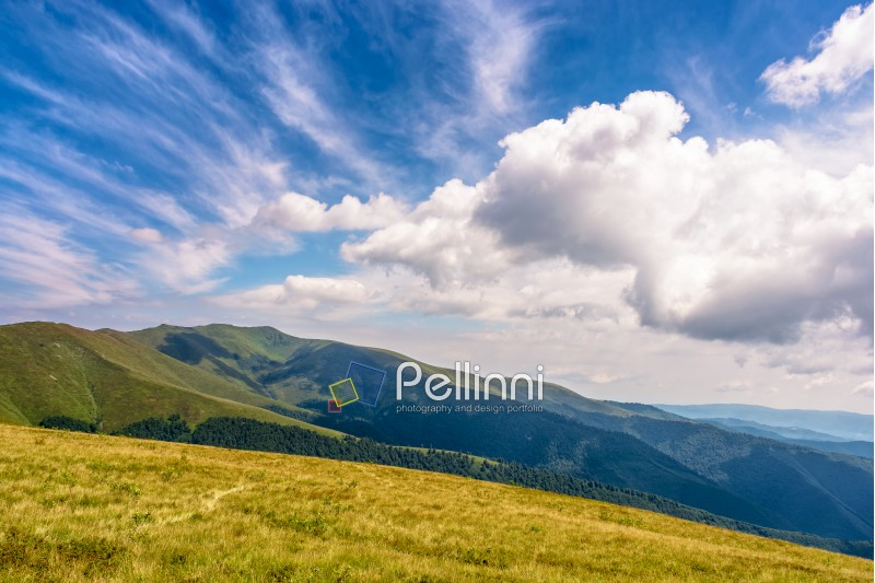 summer mountain landscape with wild grass on hillside meadow under the blue sky with clouds