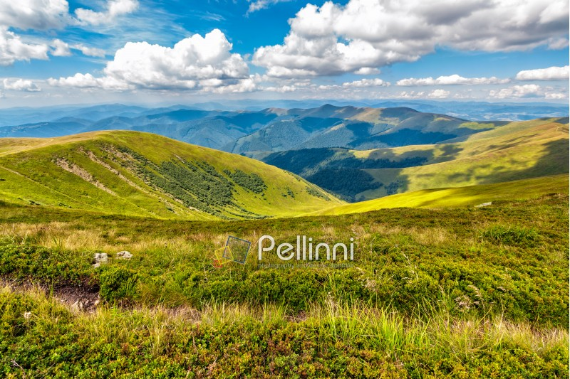 summer mountain landscape under the blue sky with clouds in morning light. meadow with path among wild grass.