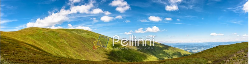 panoramic summer landscape with hillside meadow in Carpathian mountains