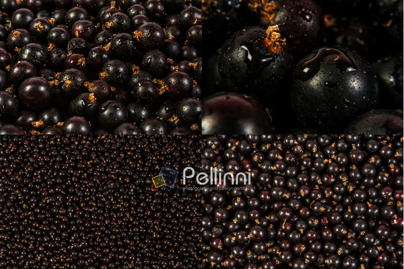 image set of black currant texture in different sizes