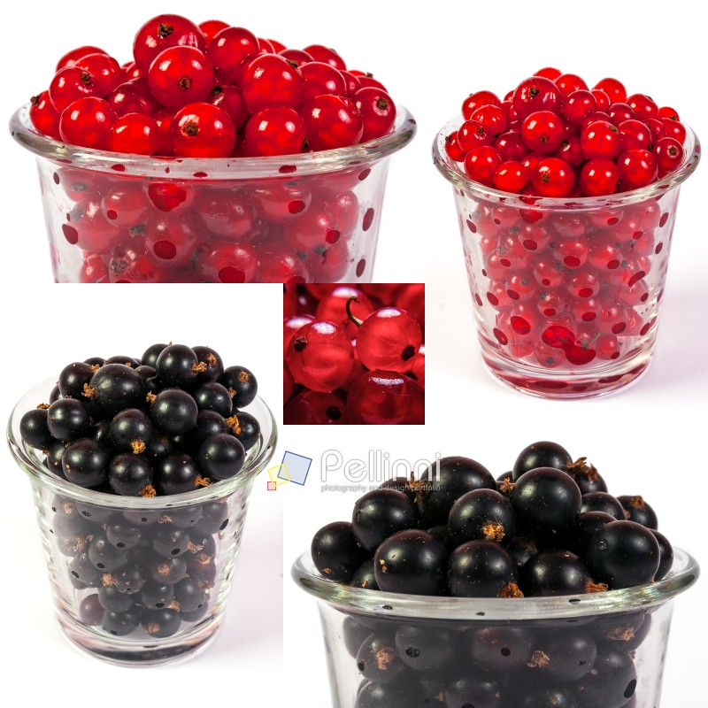 image set of red and black currant in a glass in different sizes