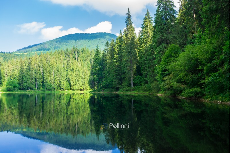 lake among the pine forest. beautiful nature scenery in mountains. green environment concept. summer landscape