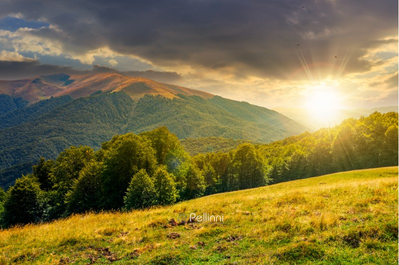 beautiful landscape of Carpathian mountains at sunset. forested hills and Apetska mountain in the distance in summer