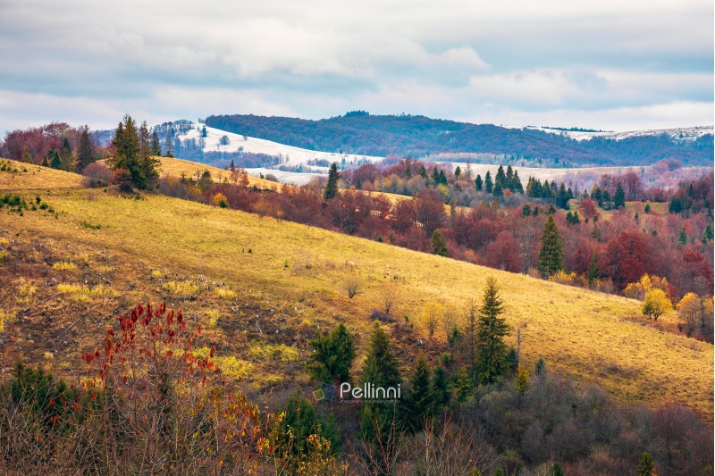 late autumn in mountains. meadow with weathered grass and trees in fall color. distant hills in snow. overcast sky. gloomy november weather.
