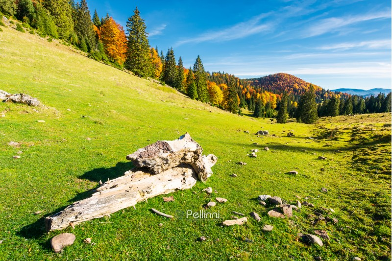 log on a grassy hill in Apuseni Natural park. mountain with deciduous forest in yellow foliage in the distance. beautiful autumn landscape of Romania. wonderful warm weather with beautiful sky