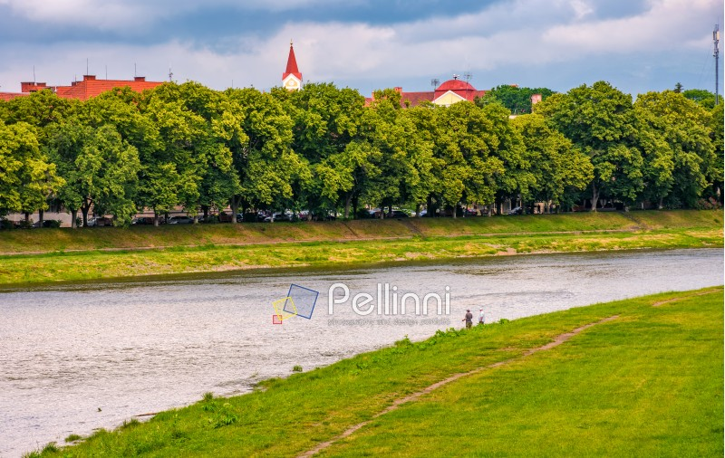 longest linden alley in europe. Summer landscape on the river embankment in Uzhgorod, Ukraine.