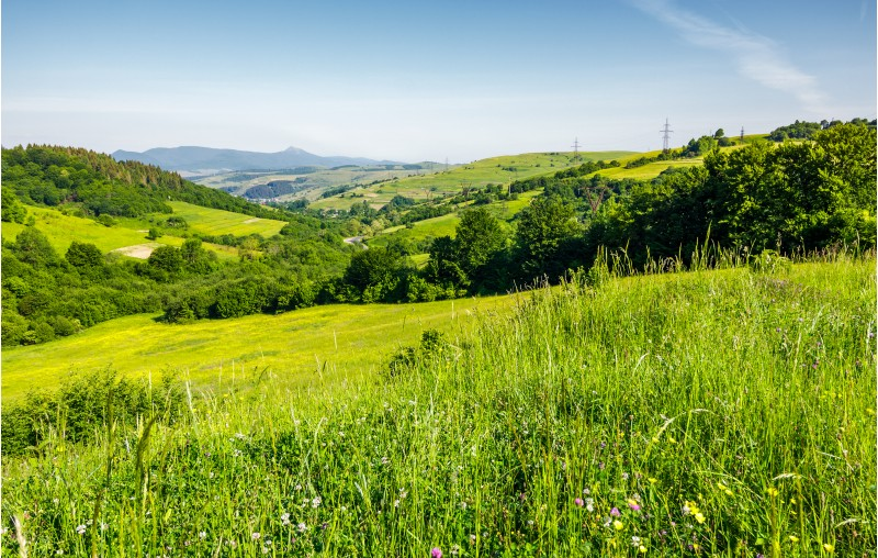 lovely mountainous countryside in summertime. grassy hillside near the forest. mountain ridge with high peak far in the distance