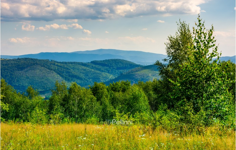 lovely summer landscape in mountains. beautiful scenery with trees behind the field under the cloudy sky
