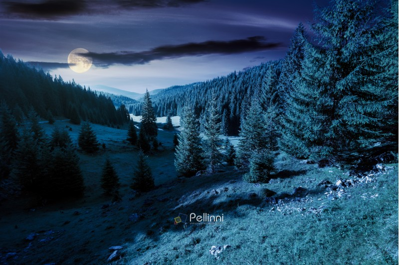 lovely valley with spruce forest at night in full moon light. wonderful landscape of Apuseni mountains in autumn. beautiful cloudscape above the ridge. travel Romania discover europe concept