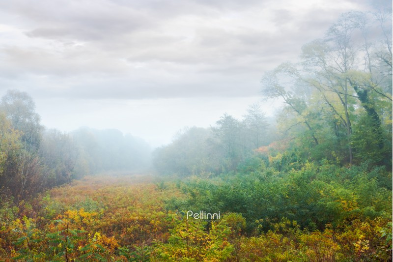 meadow in the foggy park. creepy nature scenery in autumn