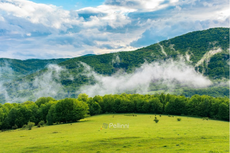 meadow on the hillside at sunrise. fog rising above the forest. mountain in the distance. cloudy sky. beautiful nature scenery in springtime