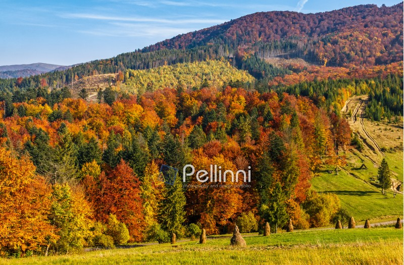 mountain rural area in autumn season. agricultural field with haystack on a hill near the forest with red foliage. beautiful and vivid landscape.