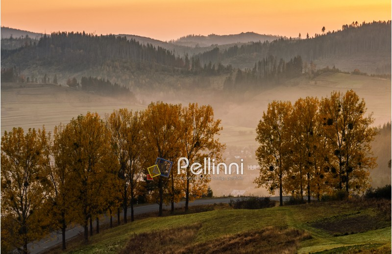 mountain rural area in autumn season. agricultural field in fog on a hill near the forest with red foliage. beautiful and vivid landscape.