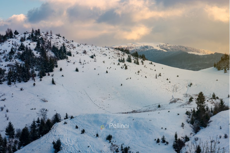 mountainous winter scenery at dawn. forested hills and distant alpine meadow in snow under the cloudy sky