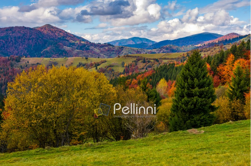 mountains with colorful foliage forest and rural fields in a distance. great autumnal landscape in fine weather and clouds on blue sky