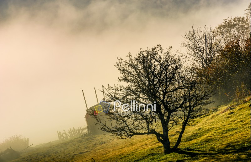 gorgeous autumnal countryside scenery with naked tree and haystack on hillside in fog at sunrise