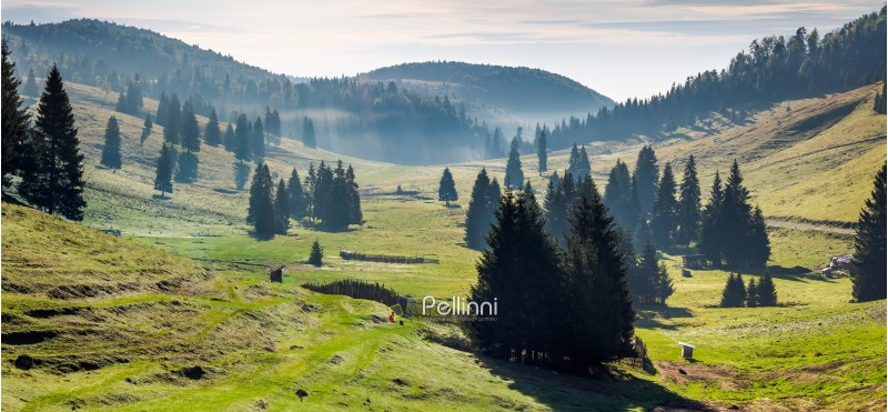 panorama of Balileasa valley of Apuseni mountains. gorgeous autumn sunrise with glowing fog among the spruce forest. Bihor mountain in the distance. beautiful travel destination of Romania