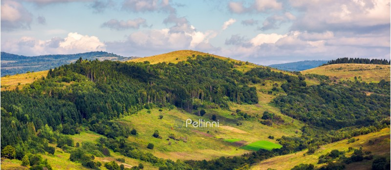 panorama of forested hills on a cloudy day. lovely scenery of Carpathian countryside in early autumn