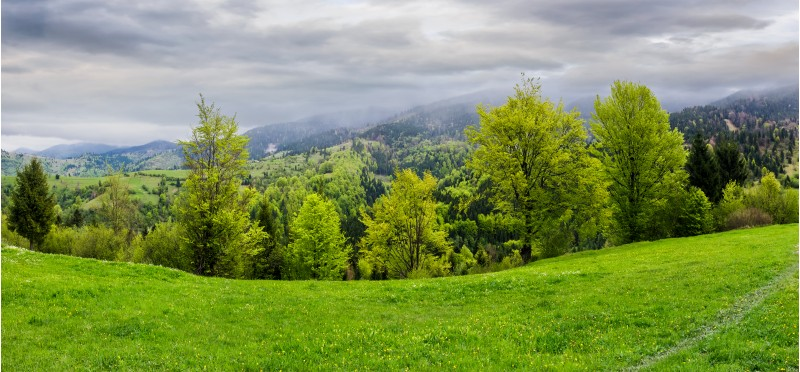 panorama of grassy hillside above the forest in mountains. dramatic cloudy sky on a rainy day. dull weather in springtime