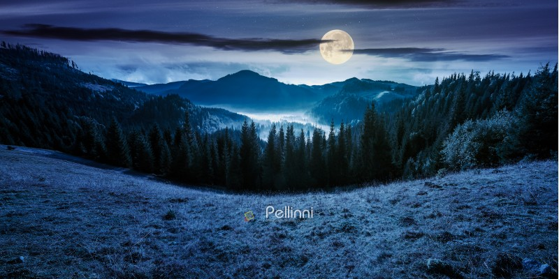 panorama of mountain and foggy valley. beautiful landscape with spruce forest on the hill. wonderful weather in Apuseni Natural Park of Romania at night in full moon light